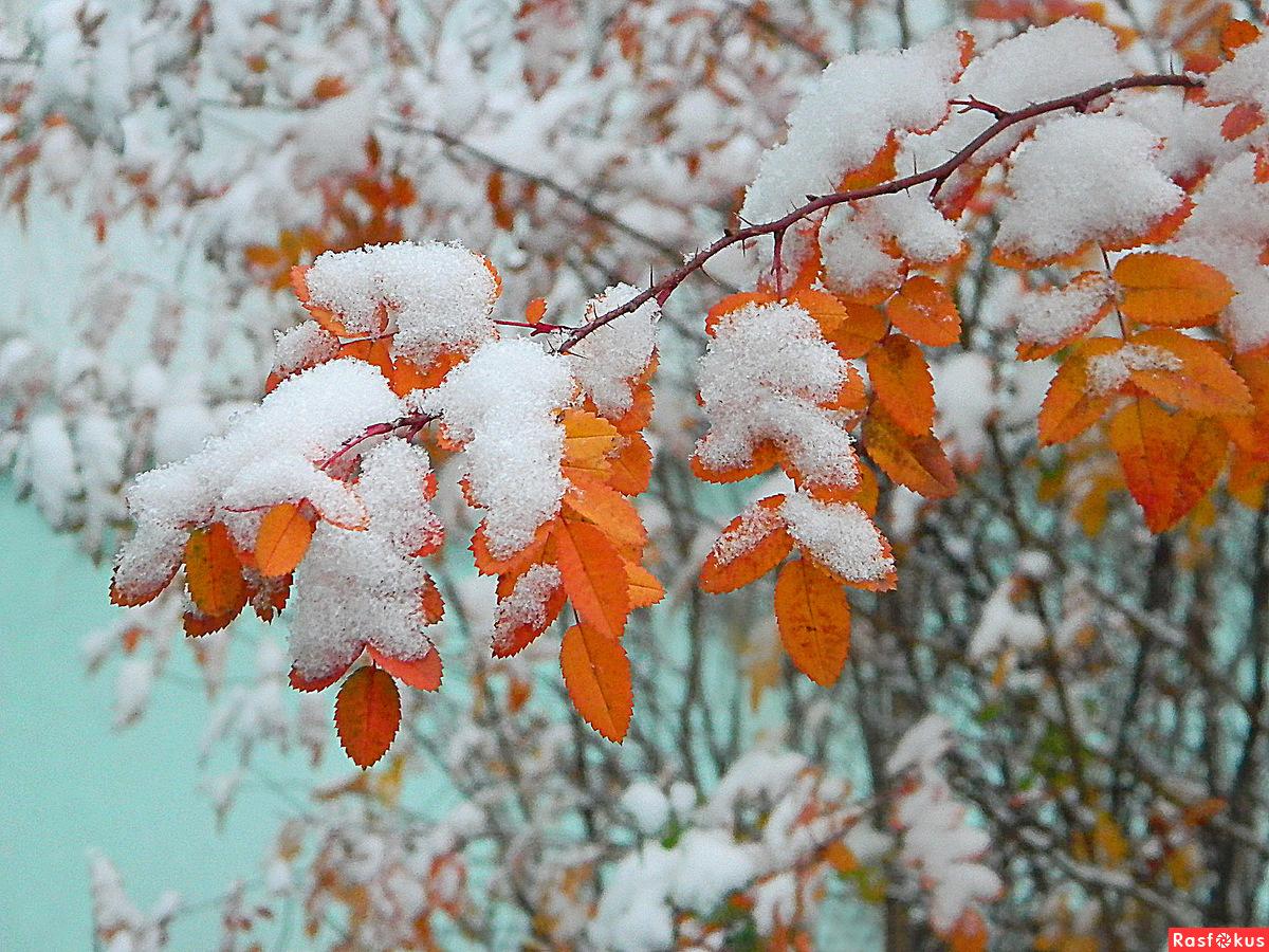 Зима открытки анимация 4
