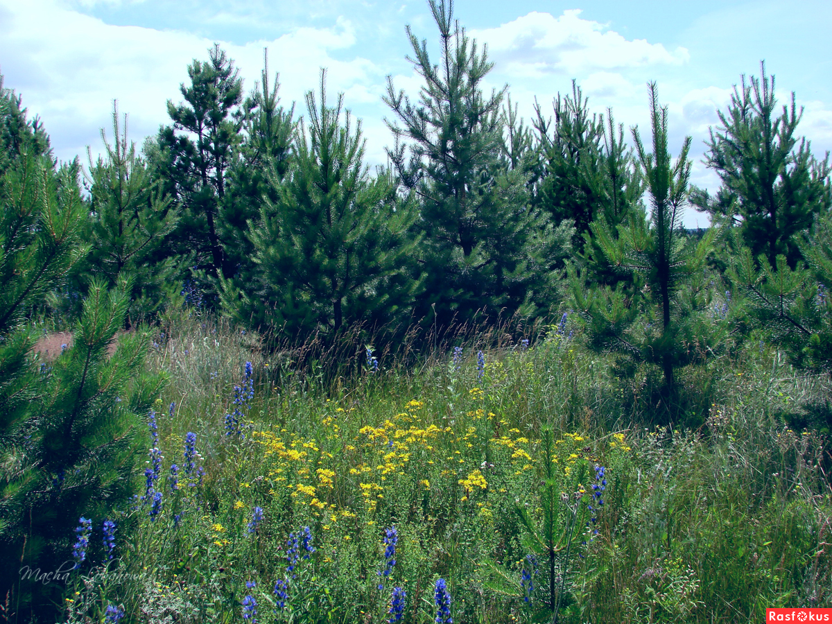 На опушке леса цветы фото