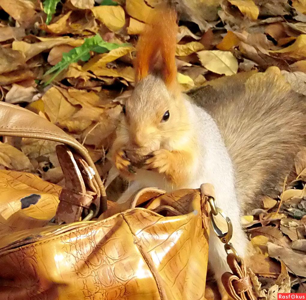 Знакомая сумка!