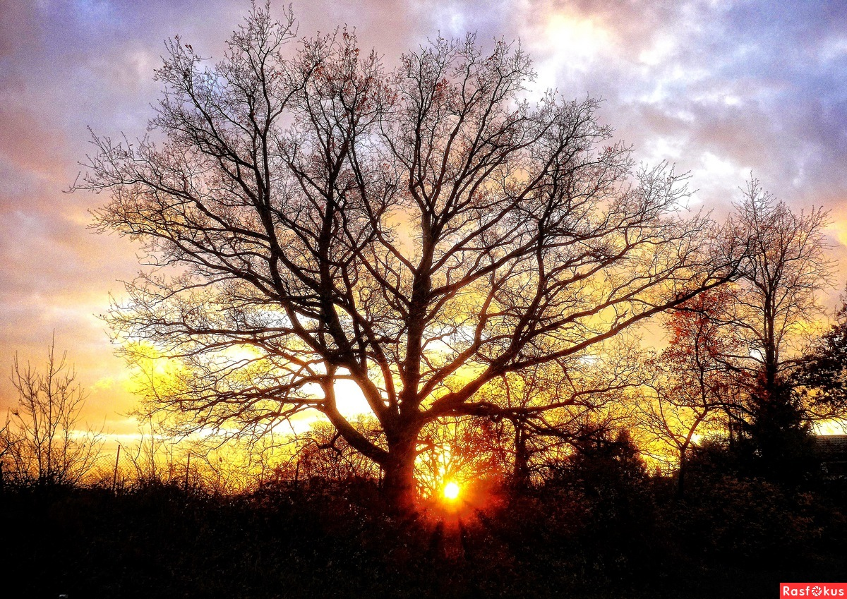 Old Oak at Sunset....