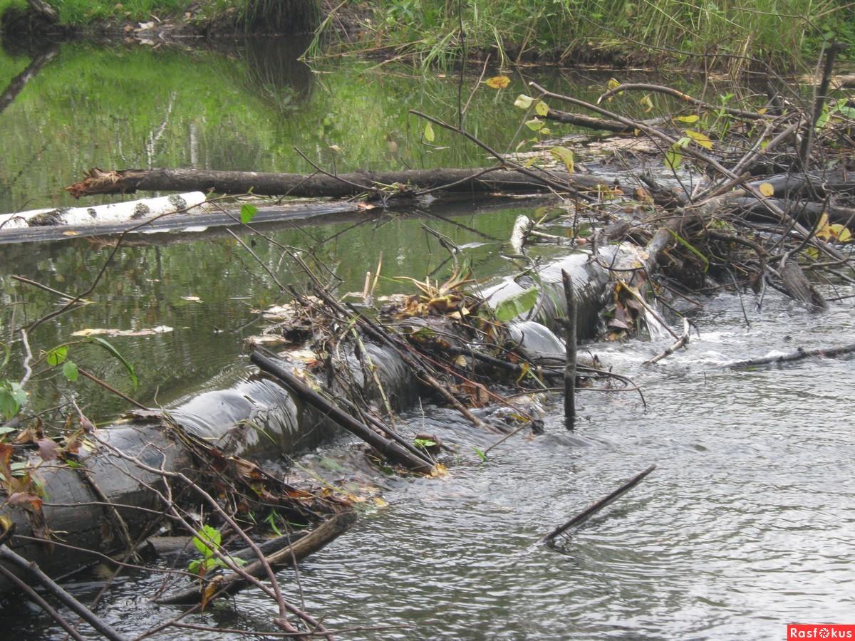 Как построить плотину на ручье