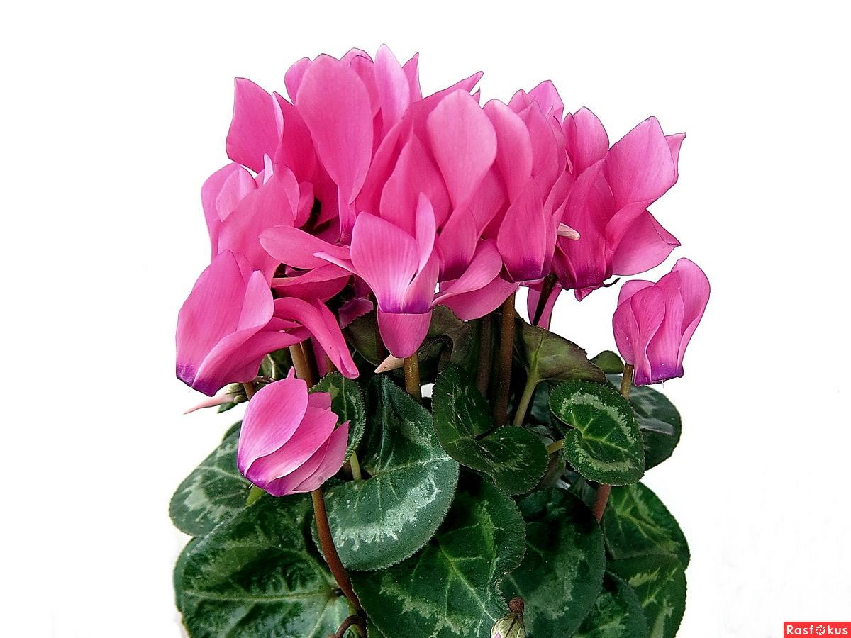 Фото цветов в горшке с названиями