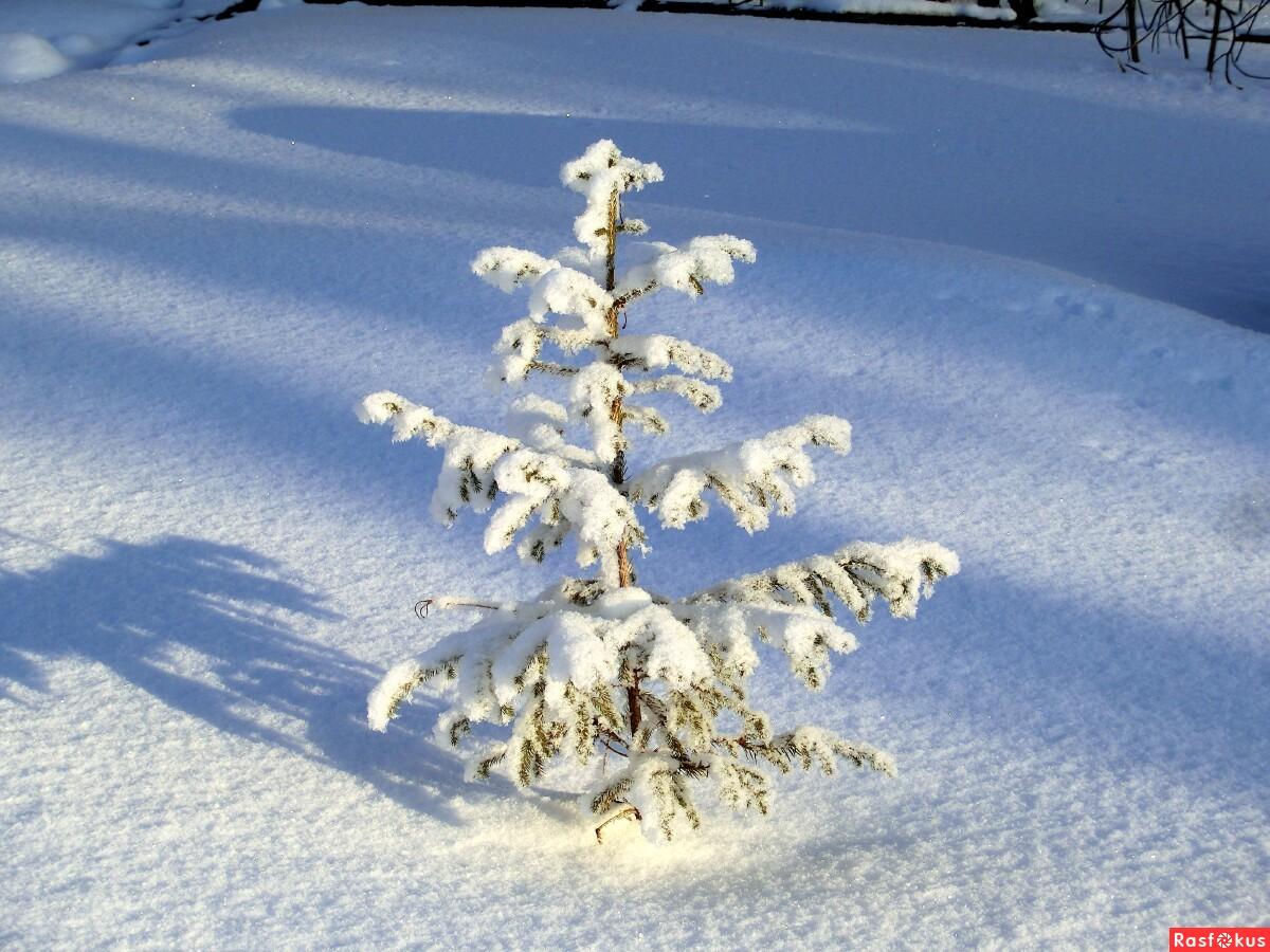 Песенка Маленькой Елочке Холодно Зимой Слушать