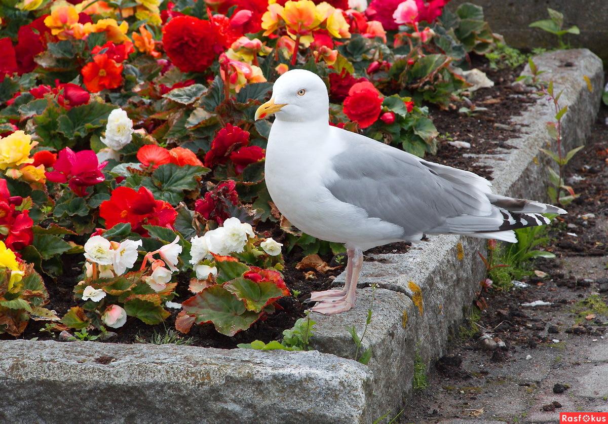 Цветы и чайки