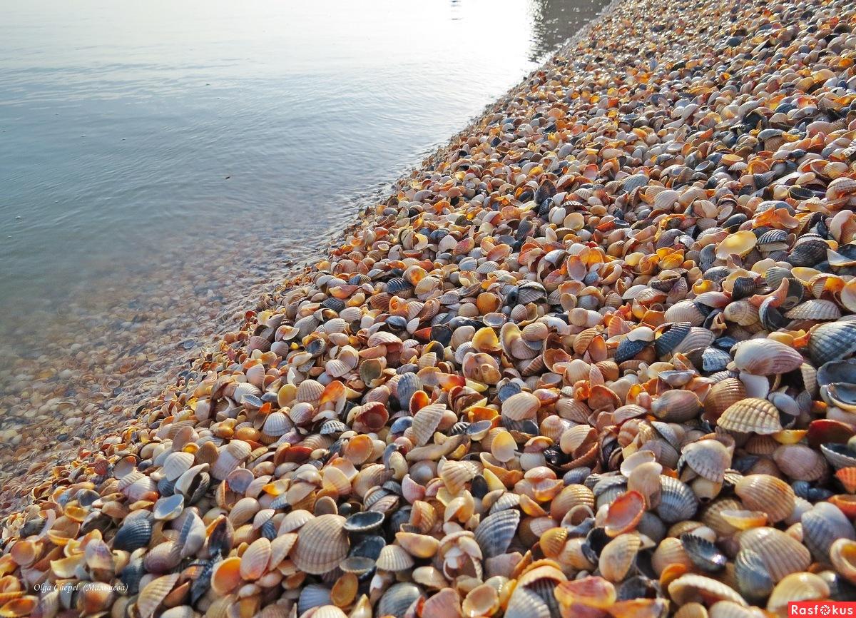 должанское азовское море фото