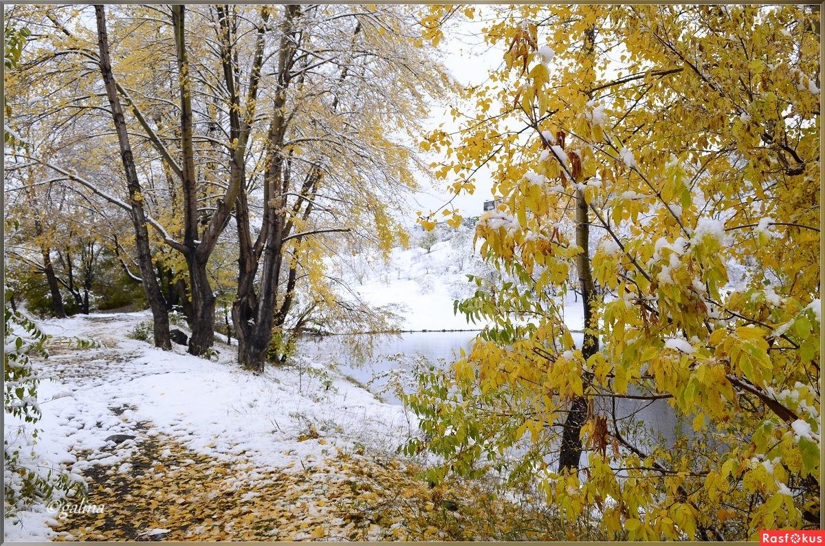лета желтого снега белого
