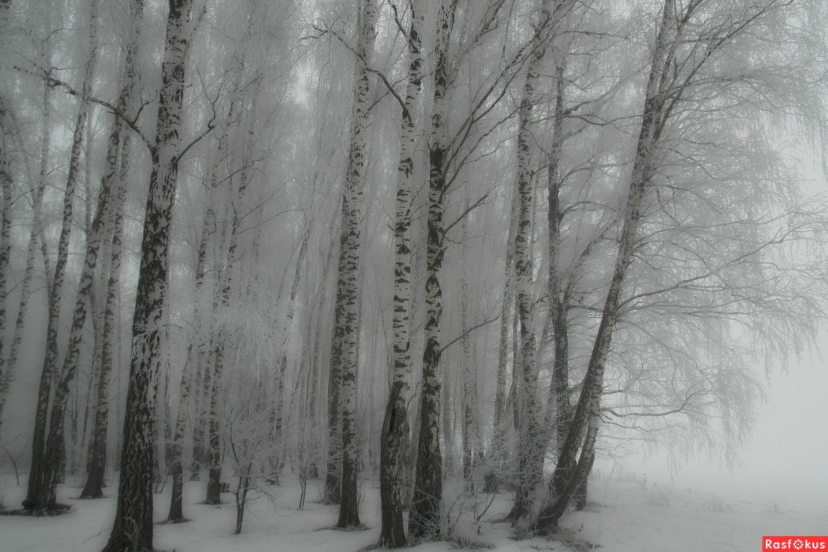 Зимний туман..