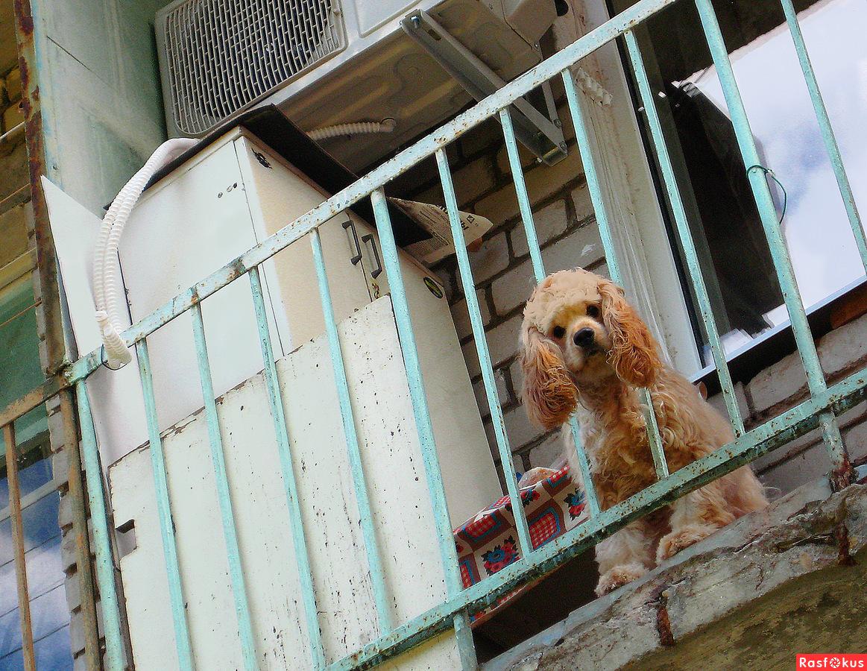 Фотография собака на балконе, автор георгий куракин.