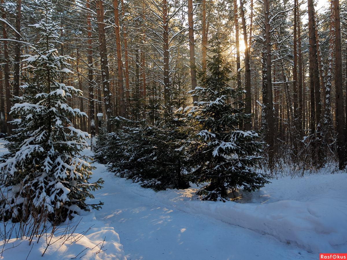 Фото зимнего леса для детей