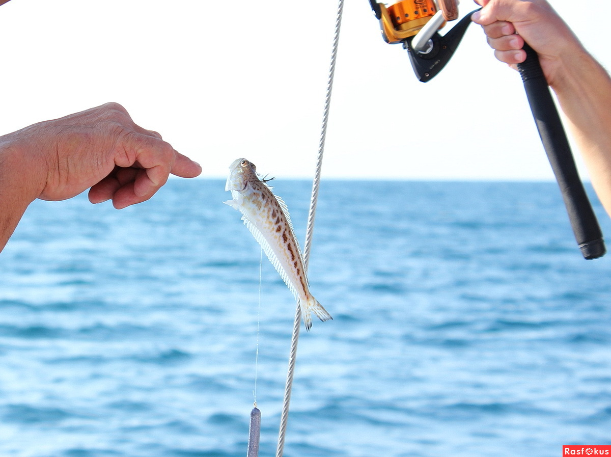 токсичная рыбалка