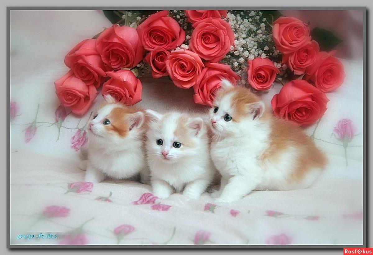 Открытки и кошками и котятами 25