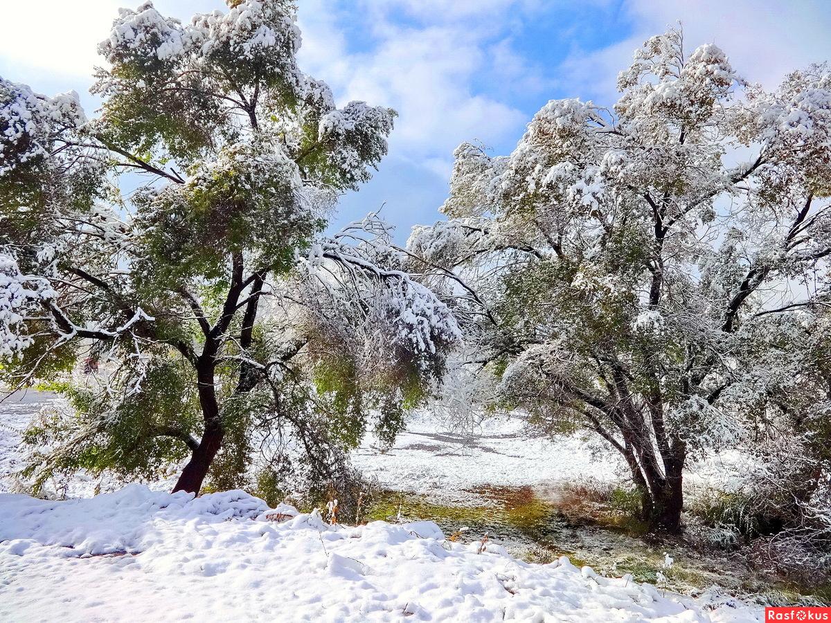 Первый снег на Притомских