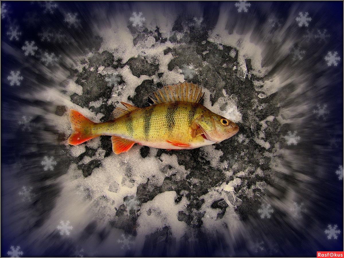 триколор рыбалка астрахань