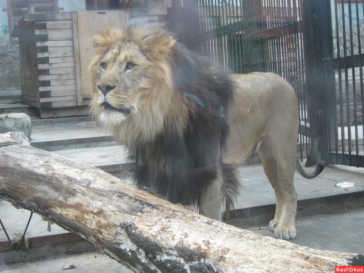 Зоопарк фото животных 7