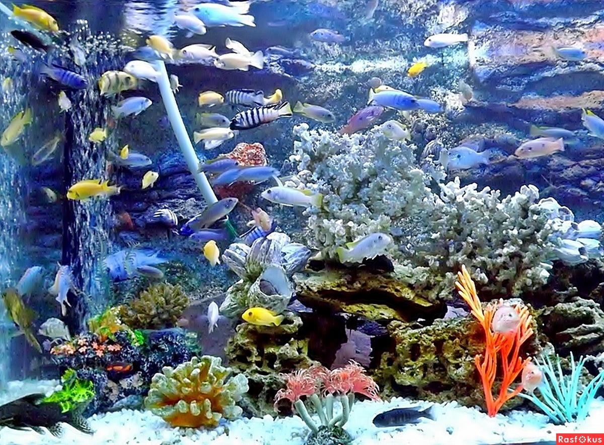 Зоопарк. подводный мир 6