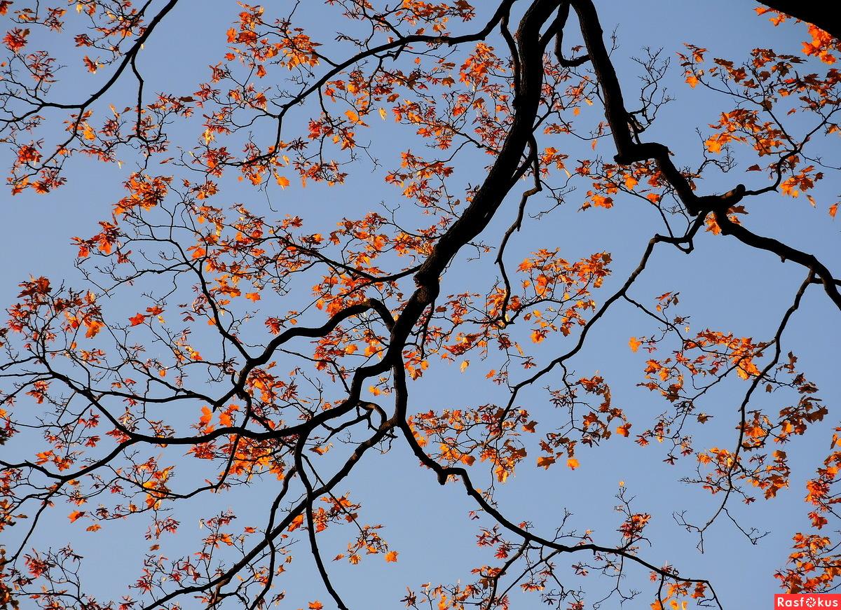Осеннее кружево Летнего сада