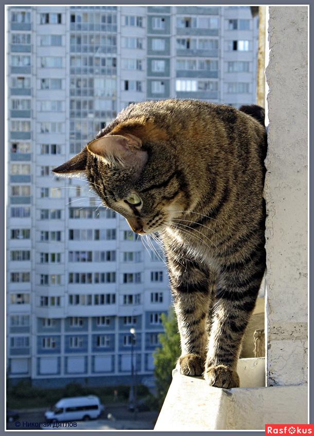 Питомник тайских кошек бытовые опасности для кошки.