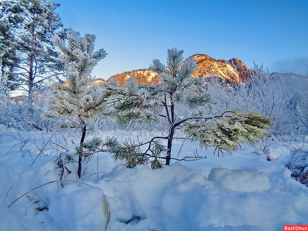 Раннее утро на голубых озерах Катуни