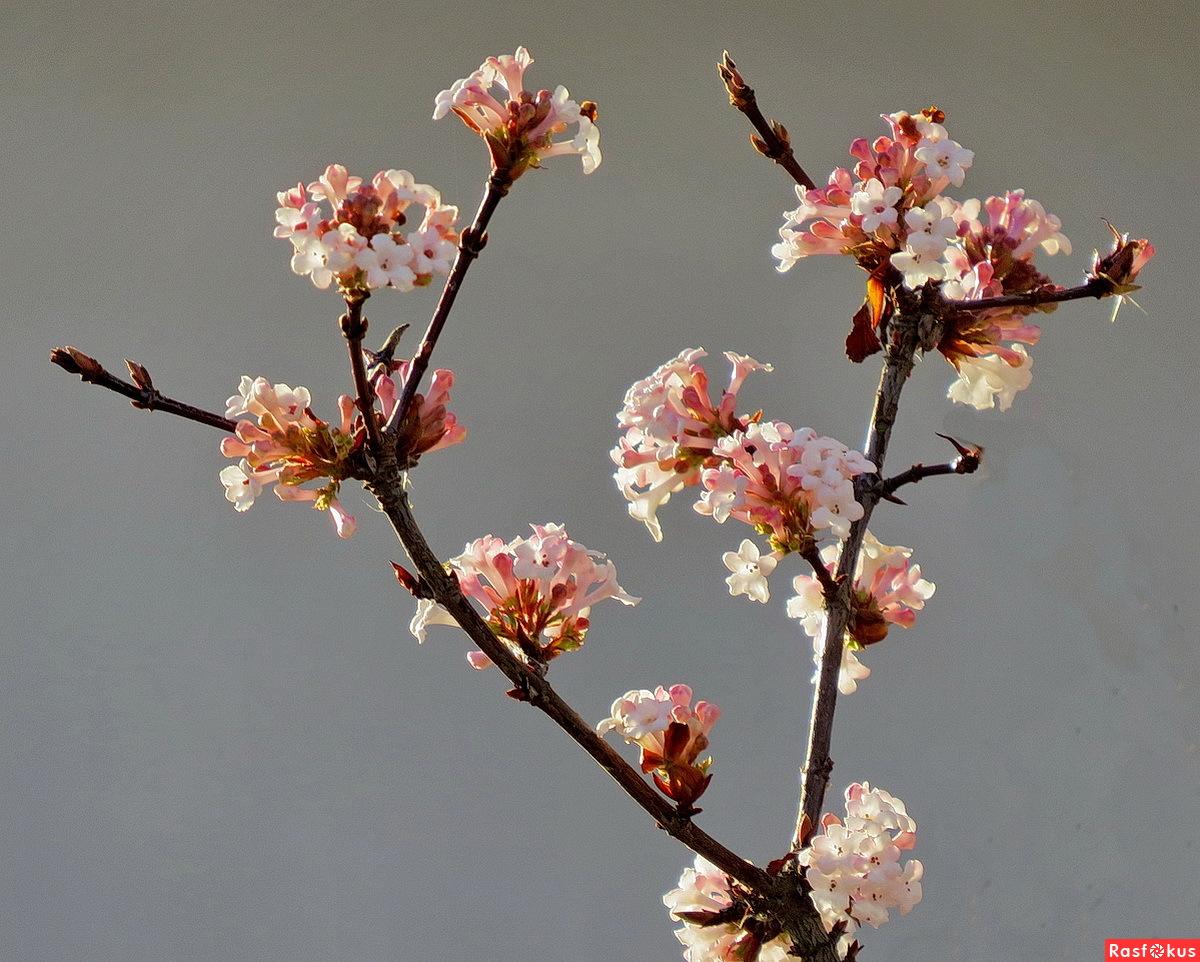 одна весна на белом свете