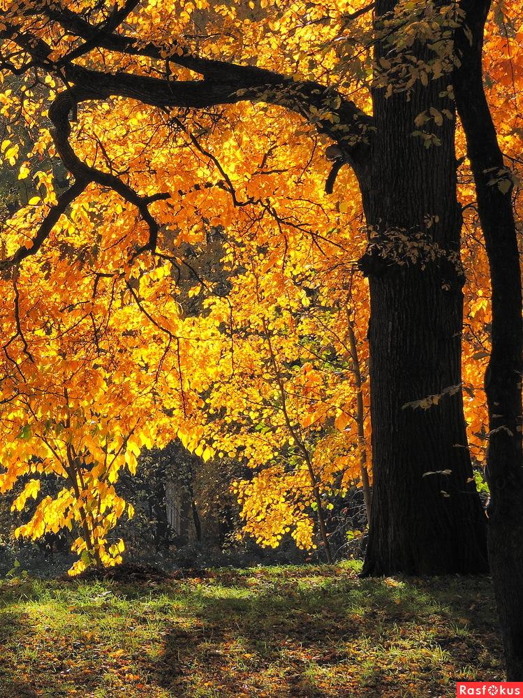 Осень янтарная