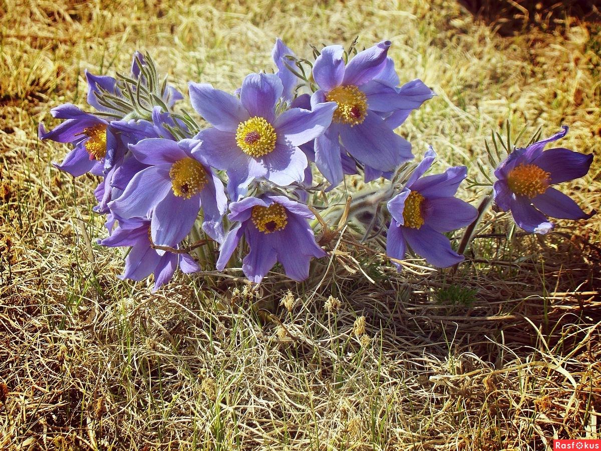 Цветы в забайкальском крае фото