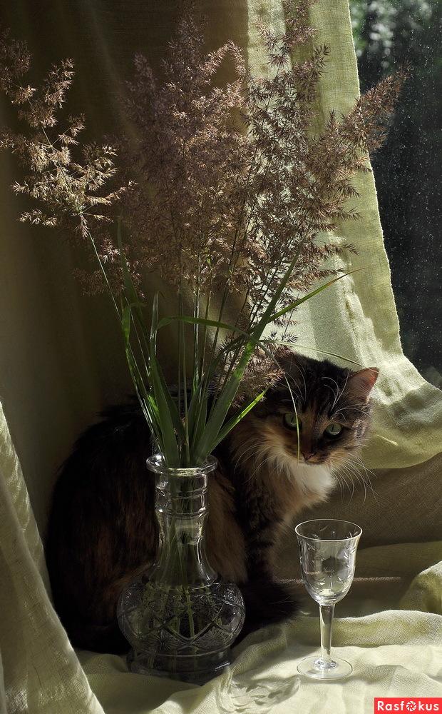 Фото: Натюрморт с кошкой. Фотограф Татьяна Осипова ...: http://rasfokus.ru/photos/photo535179.html