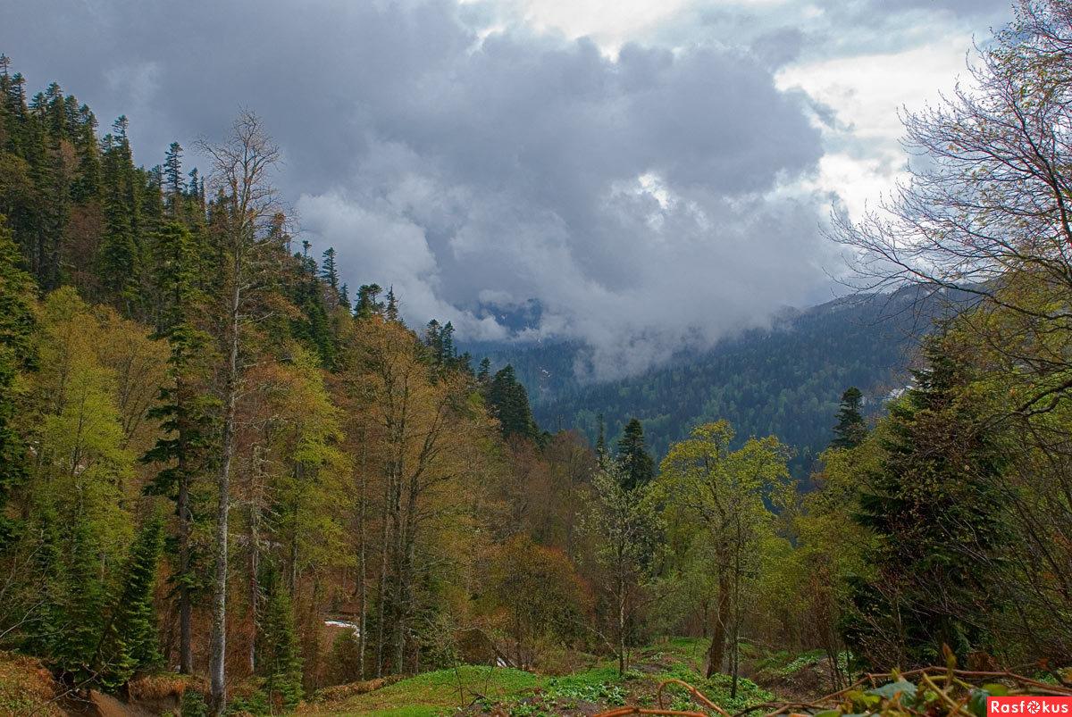 quot;с высоких гор спускается туманquot