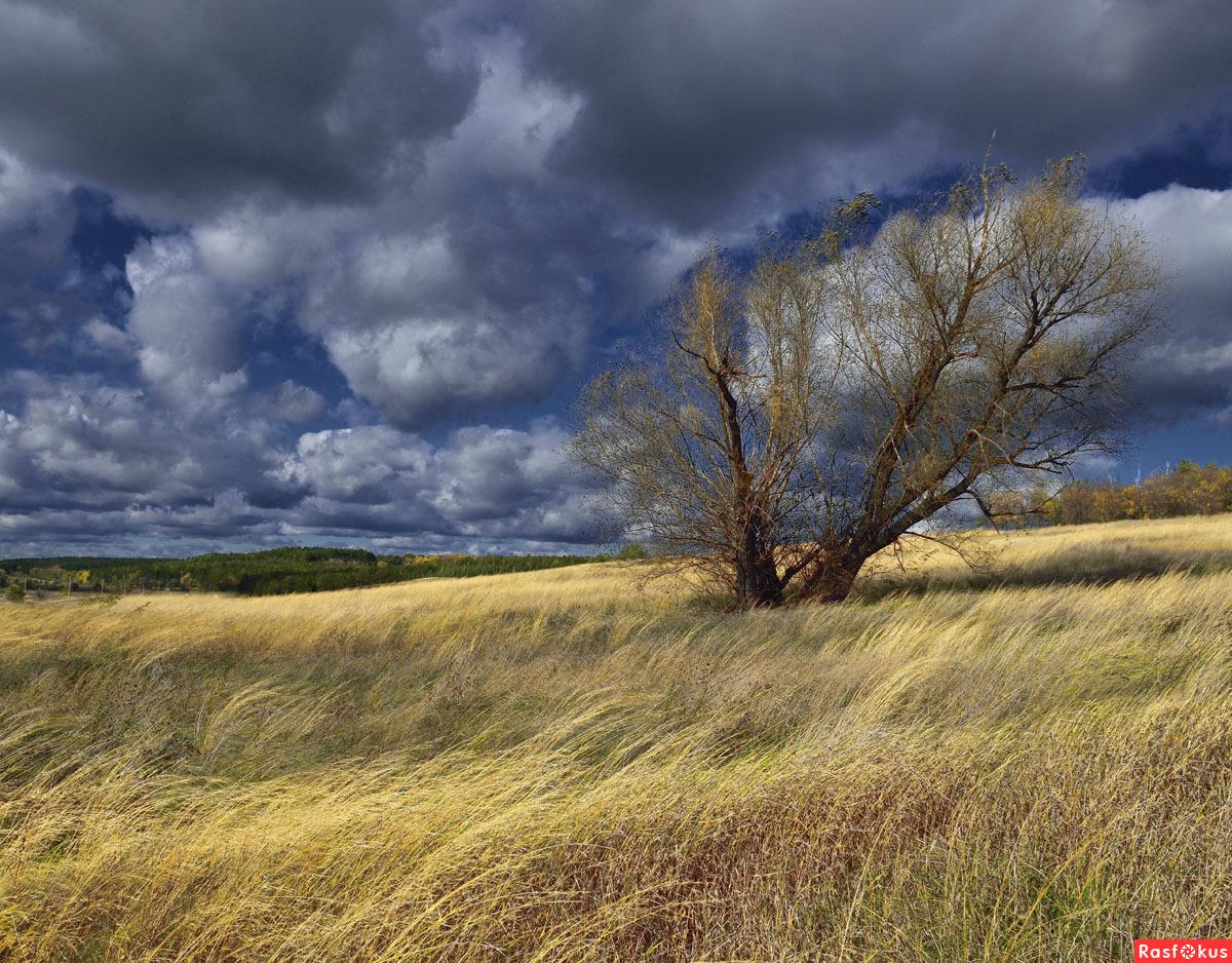 фото ветер природа #10