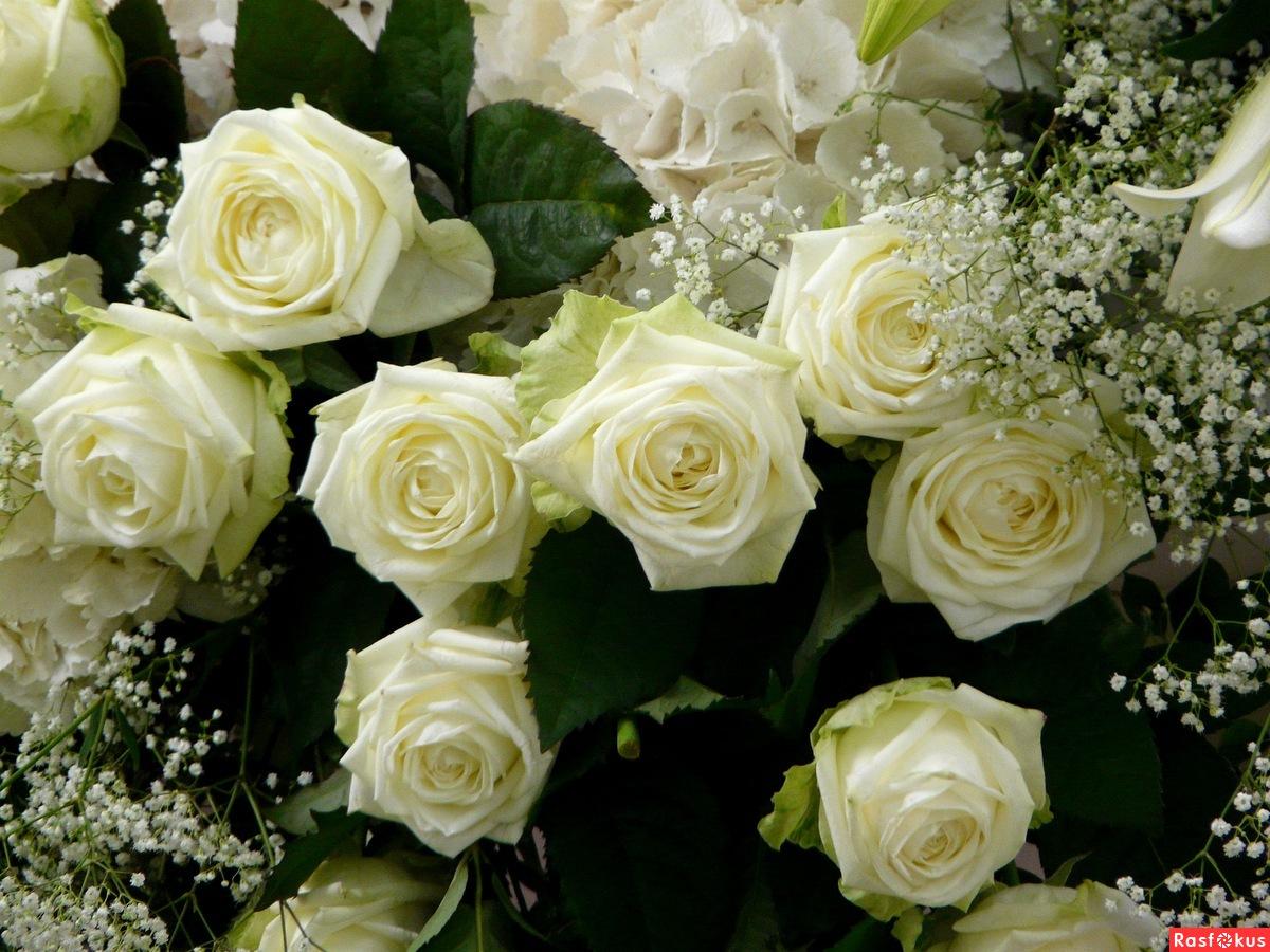 Цветок для кати фото