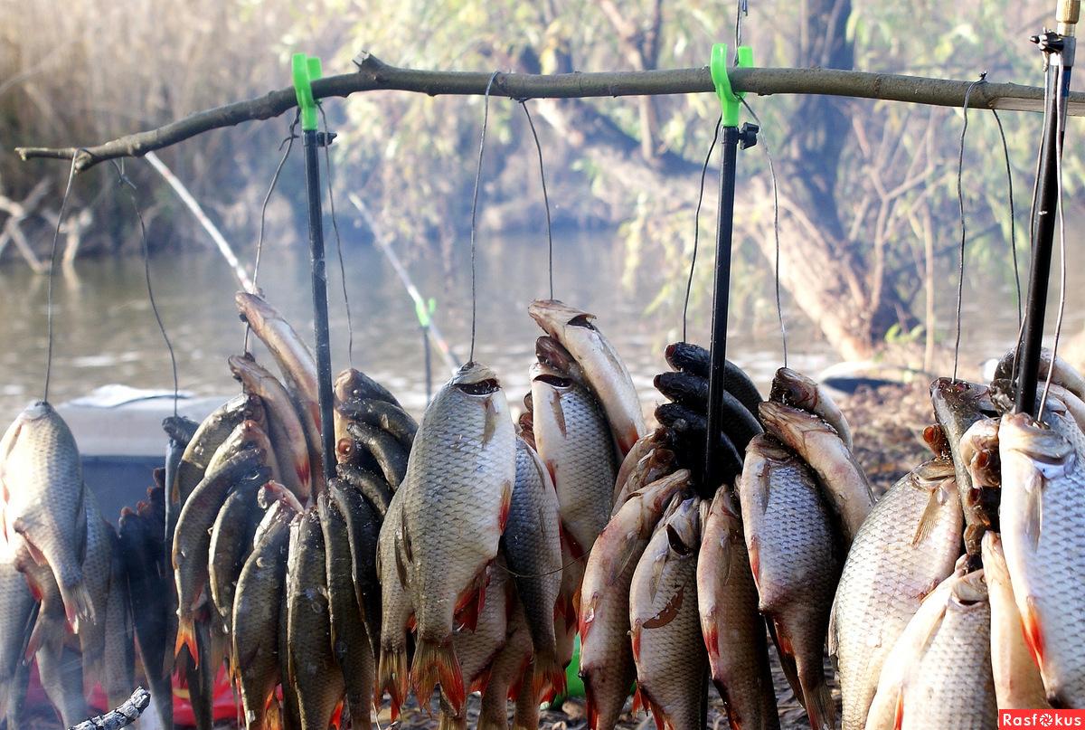 астраханский рыболовный завод