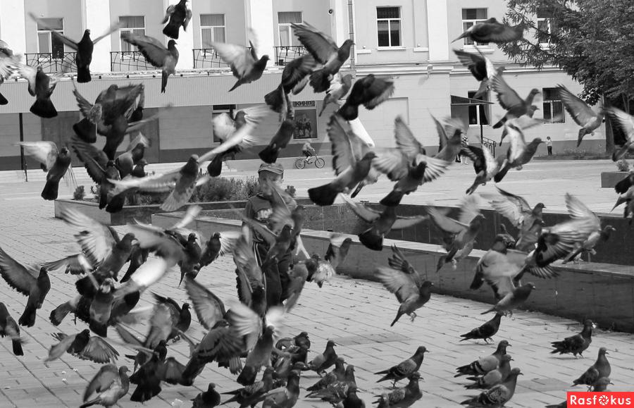 Фото: ...а он гоняет голубей.. фотограф александр кемпанен. .