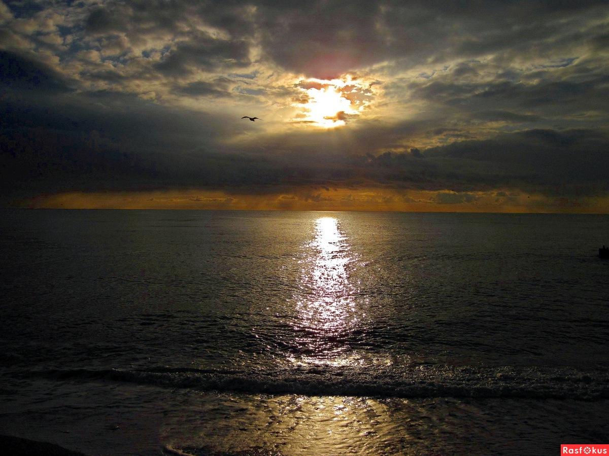Закат на Чёрном море и чайка