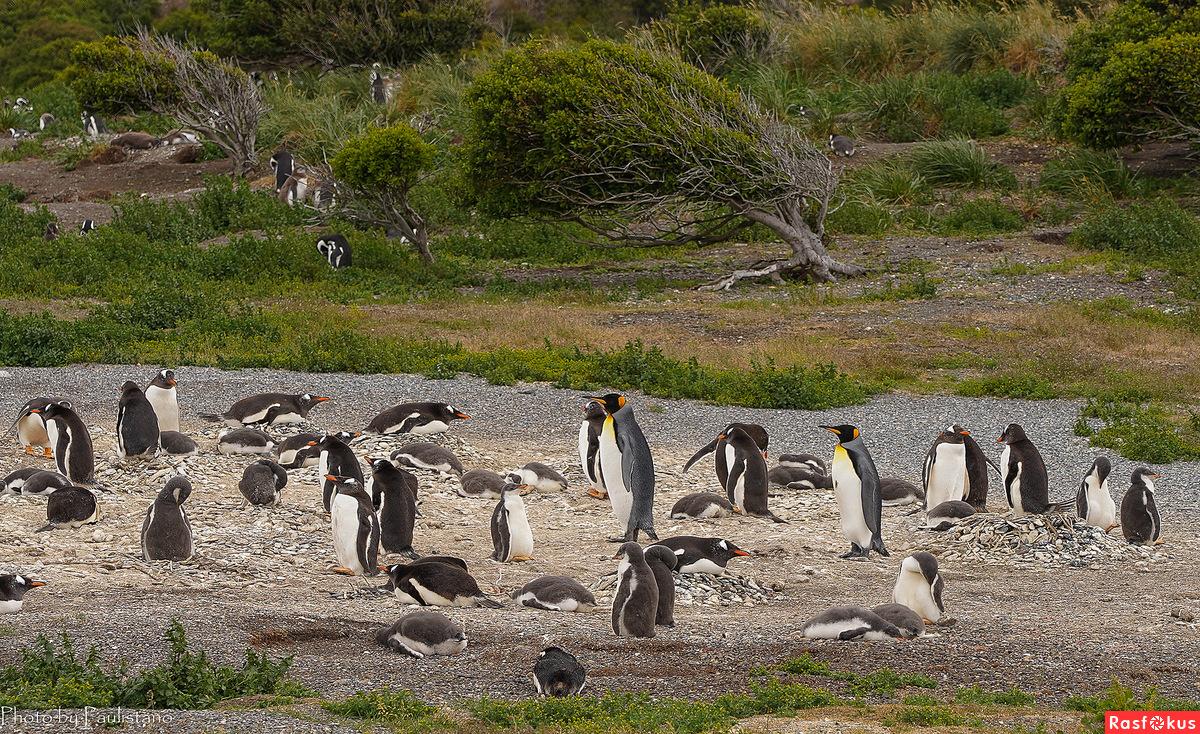 На острове пингвинов