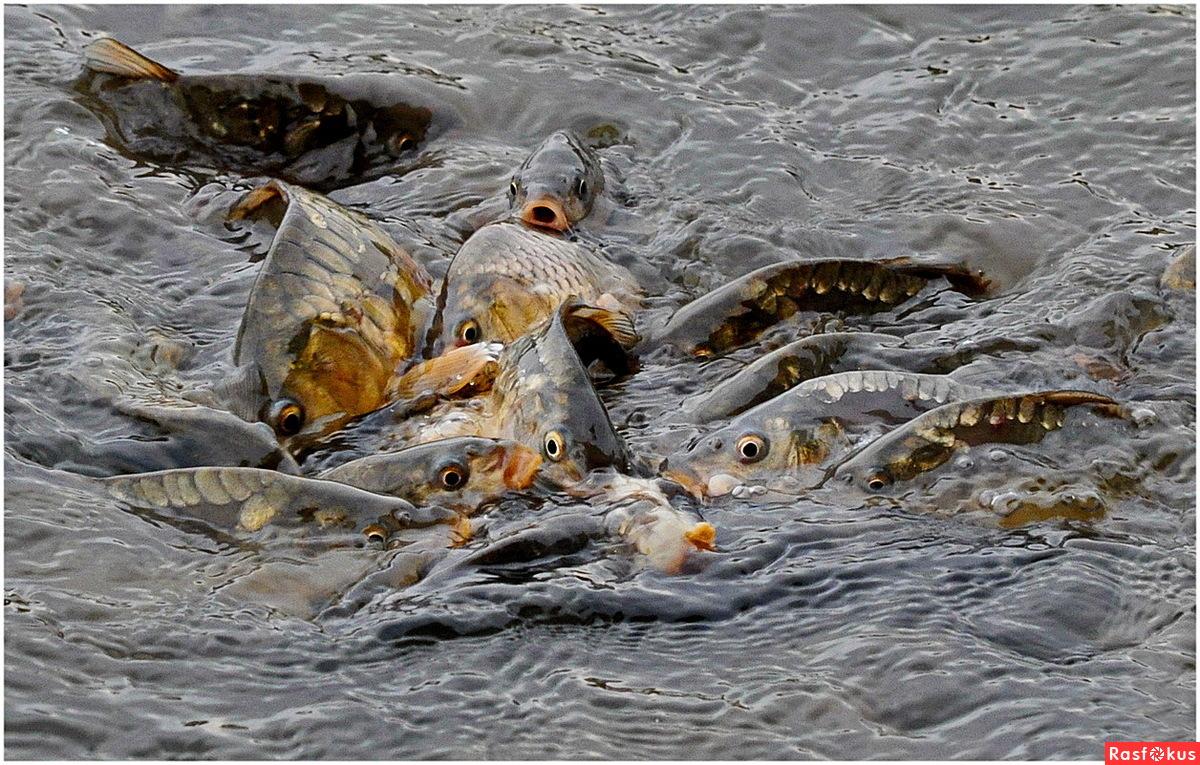 сонник ловил рыбу сетью