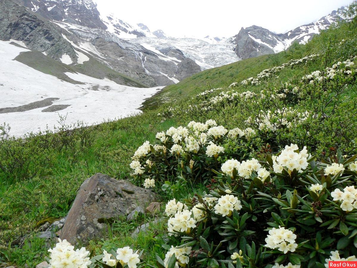 Кавказ фото с цветами