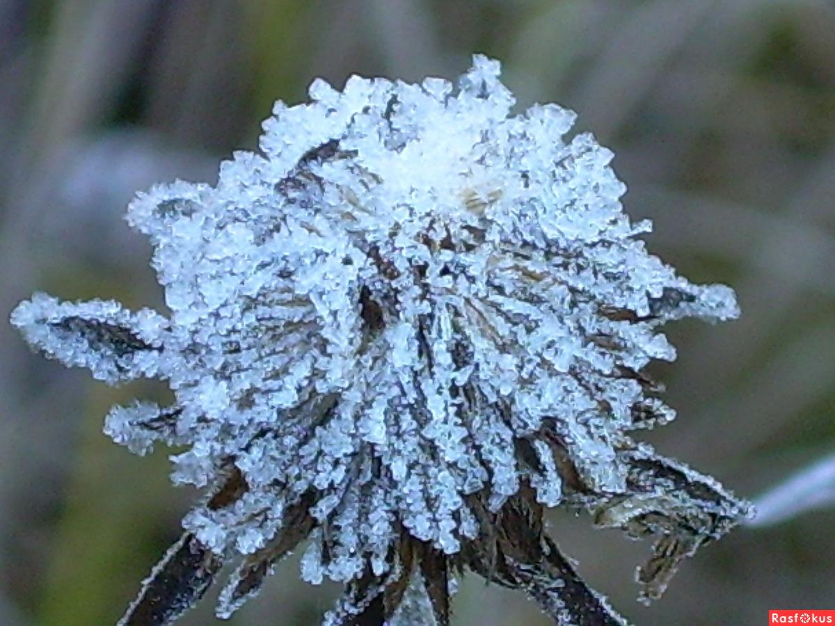 Цветок из льда фото