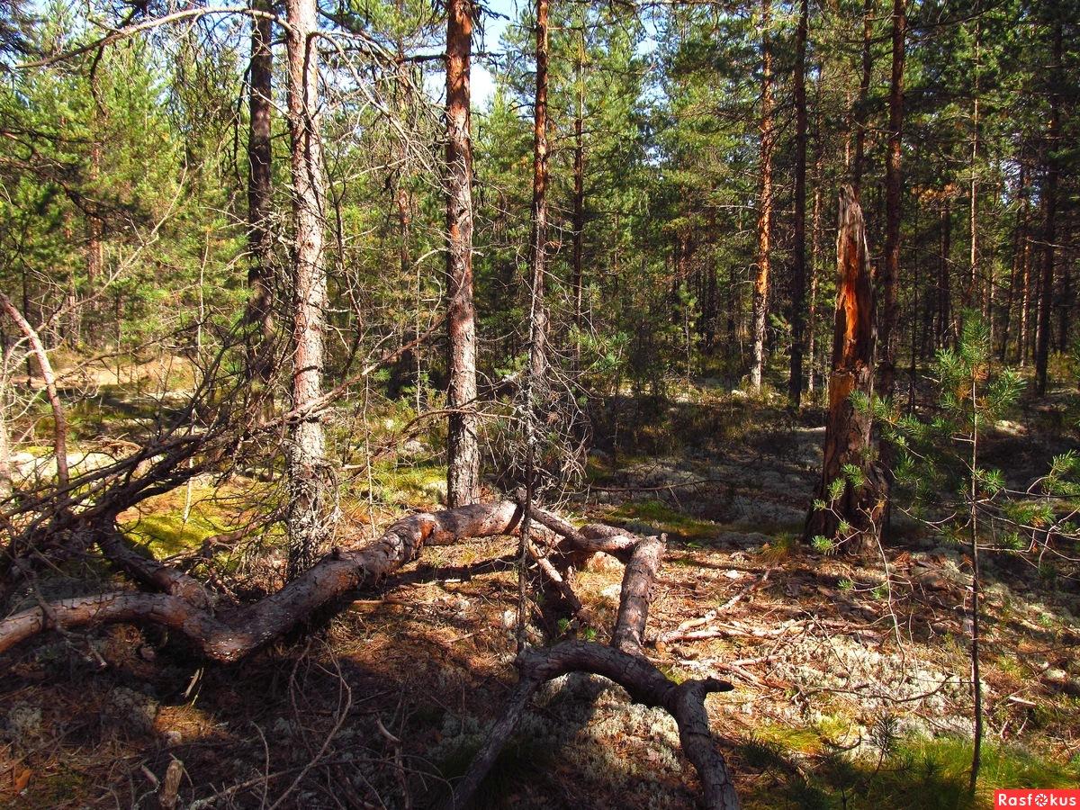 укладки террасной уничтожение леса в берендеевом царстве заказать