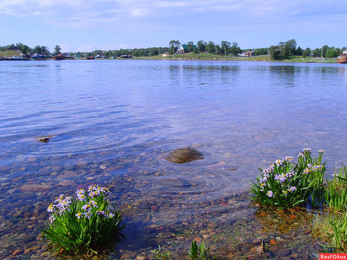 Цветы из  Белого моря растут