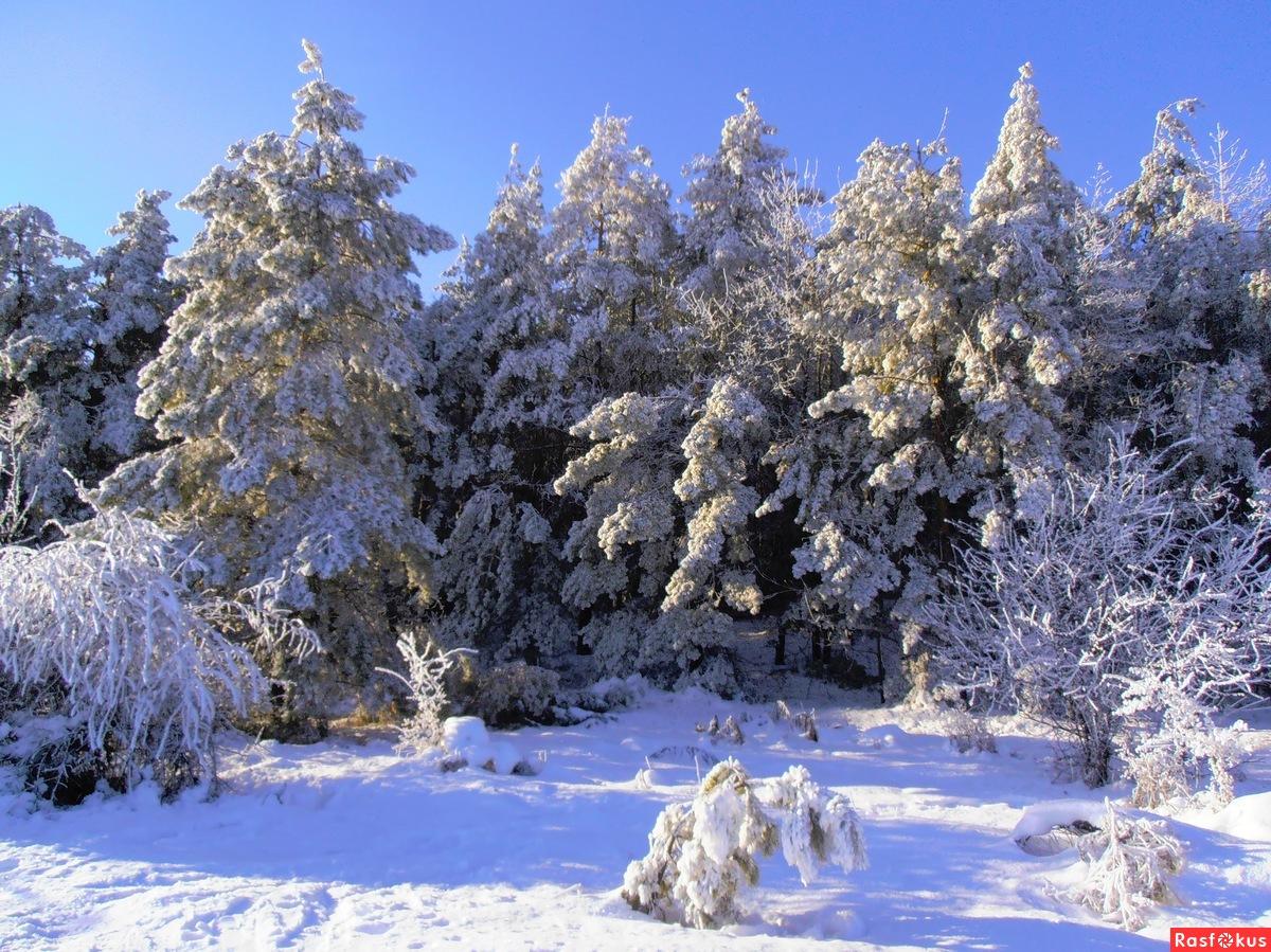 Чародейкою Зимою околдован, лес стоит...