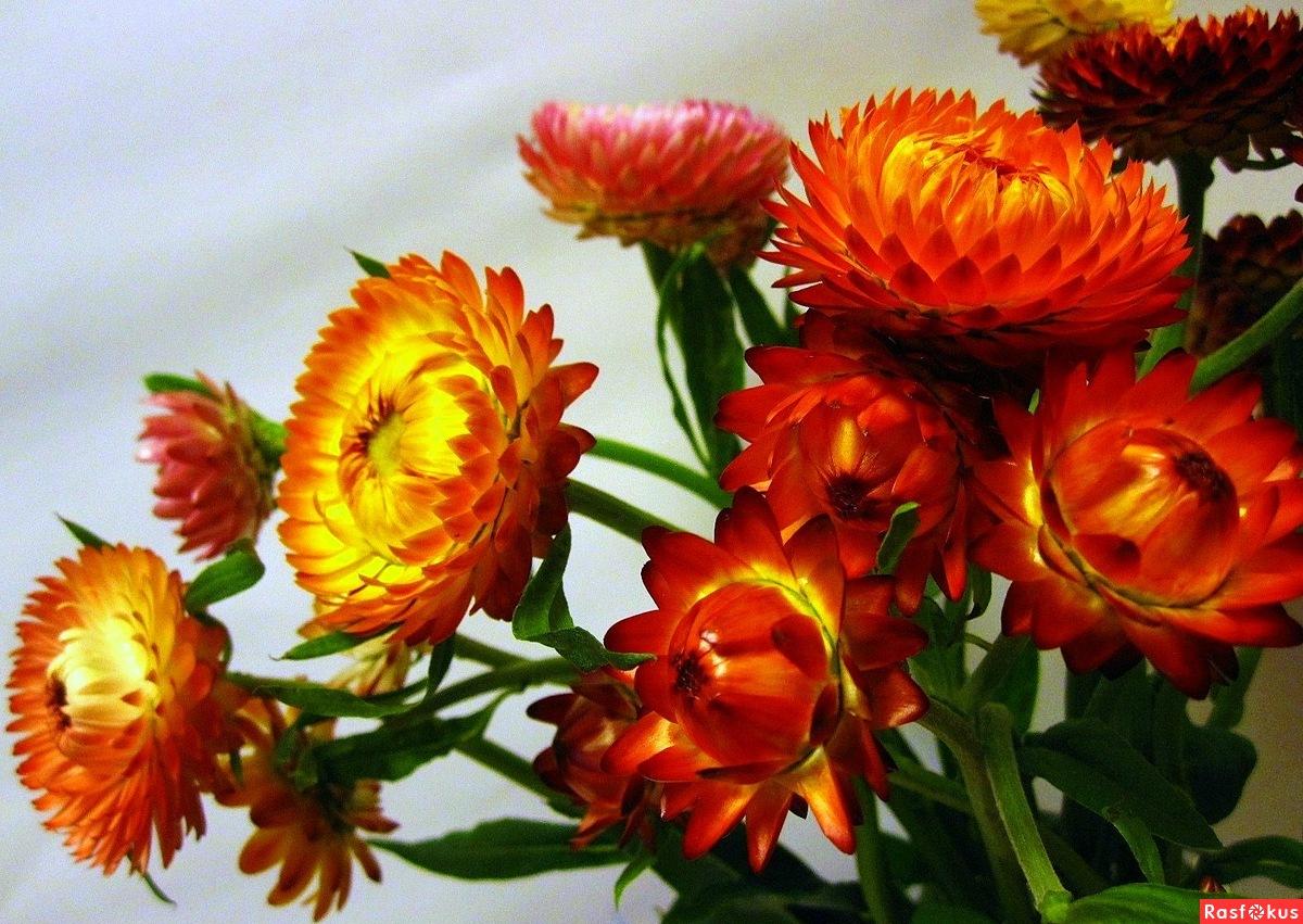 Фото гербария из цветов 44