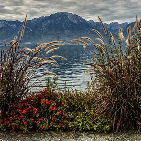autumn in the Swiss Riviera
