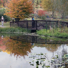 краски осени - colours of autumn - Once upon a time in October - somewhere in Americas - in a Botanical Garden - a wooden bridge