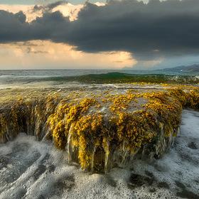 sea grass plate...