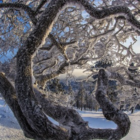 winter patterns in a magical forest