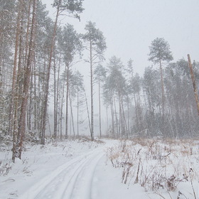 Ivanovka Forest. January Snowstorm #3