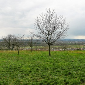 Panoramic View over the Rhine Valley