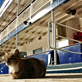 from the life of a ship's cat...